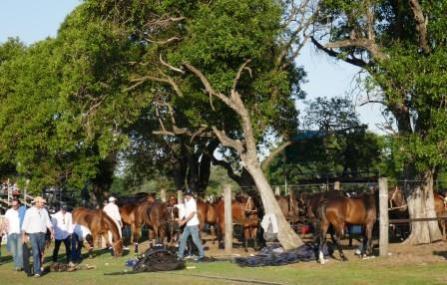 Pferde-Ersatzteil-Lager