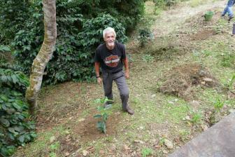 wir pflanzen einen Kaffeebusch