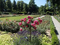 ベルンのバラ公園