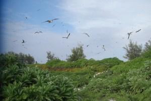 バード島に舞う鳥