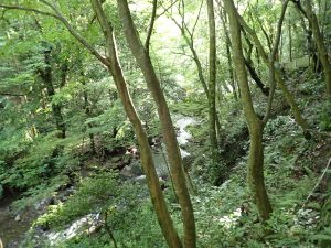 「原始の森」犬鳴山霊場