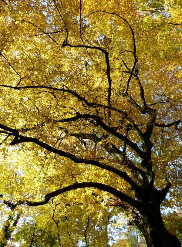 goldener Oktober_klein
