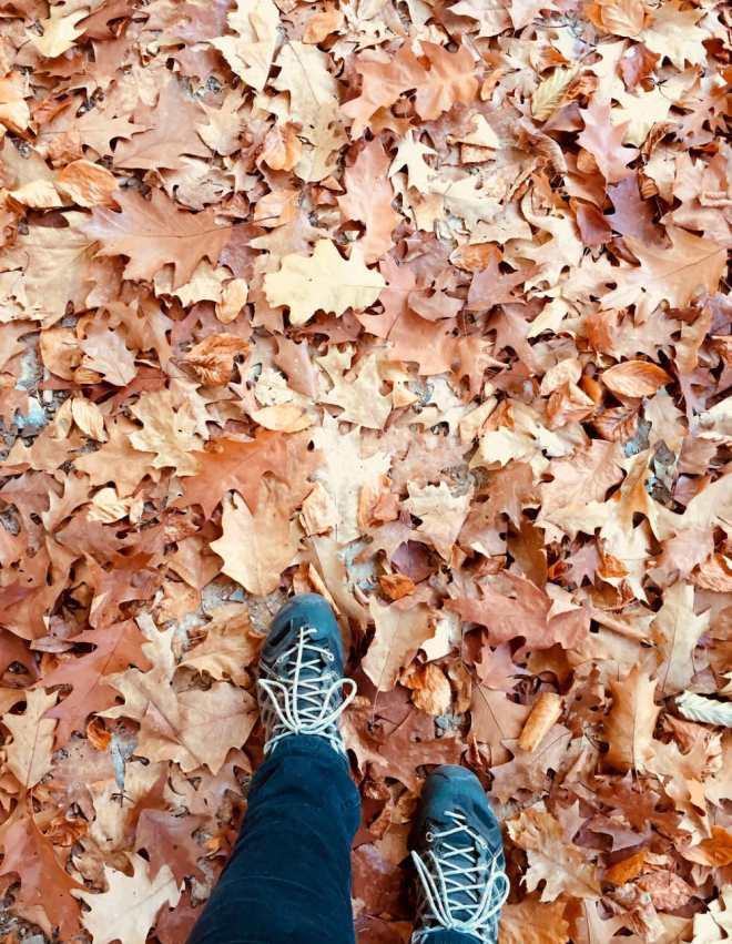 Warum ein Spaziergang im Wald gegen Stress hilft
