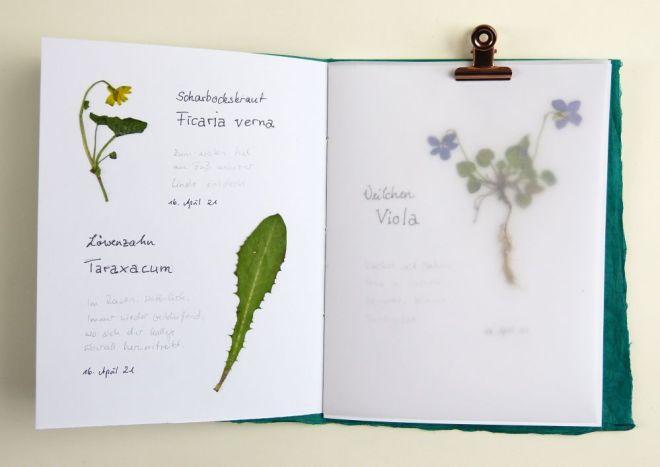 Herbarium mit Beschriftung