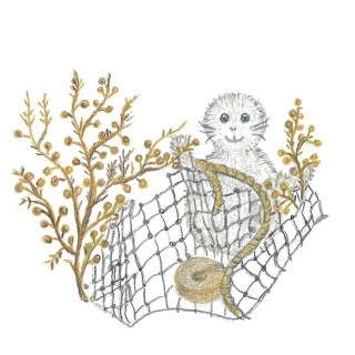Noriko med sargassosnärja, Sargassum muticum. Illustration av Marie Lenngren och Ingmari Åkerman.