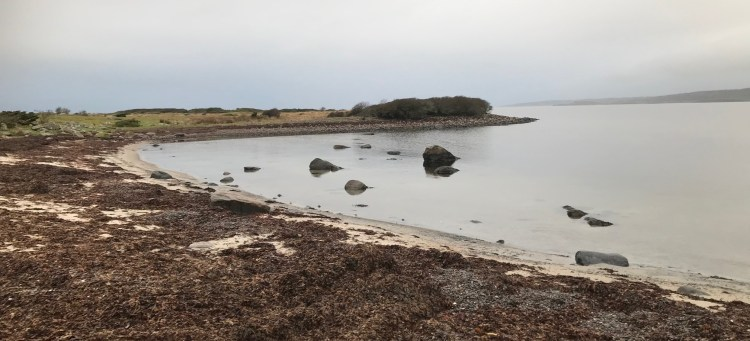 Årnäsuddens naturreservat, tång på stranden