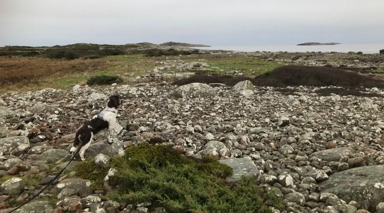 Hund på Årnäsuddens naturreservat