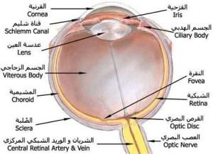 العين 2