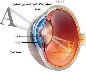 العين 3