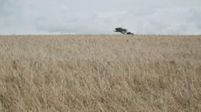 Location shot of field in Pembrokshire