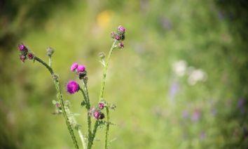 Wildflowers by Heledd Wyn
