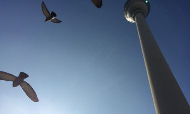 Tower and birds Berlin