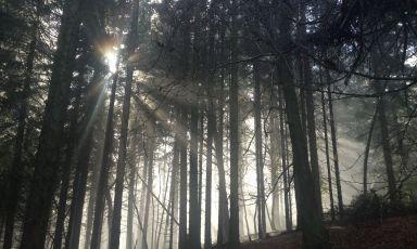 Atmospheric woodland by Heledd Wyn