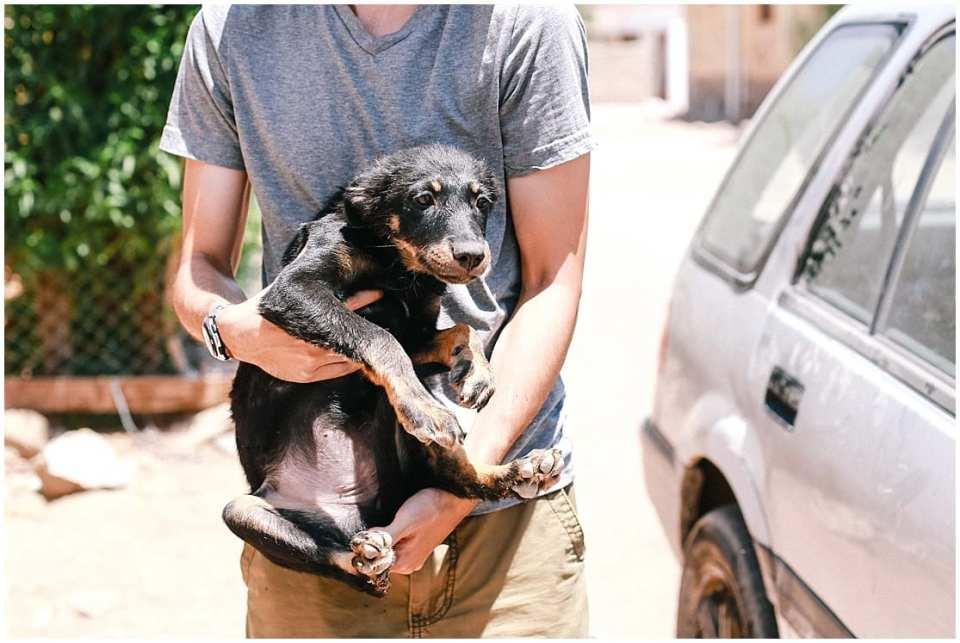Street Dogs Cat Dahab Egypt Animal Welfare