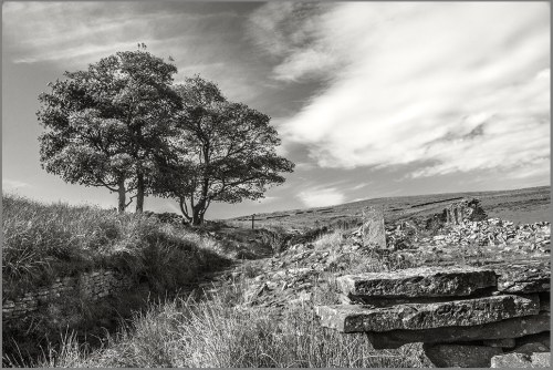 OLD GRANE WITH TREE FLICKR