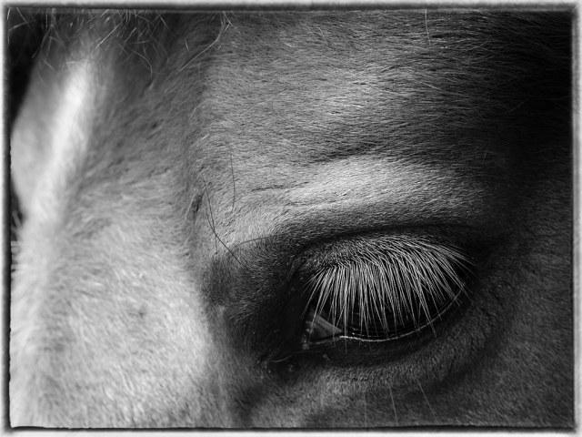 Ash's Eye web