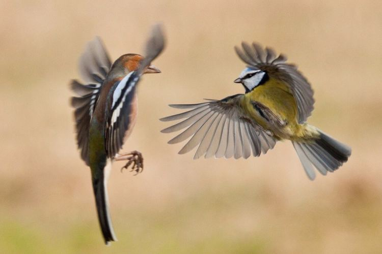 2 birds in flight
