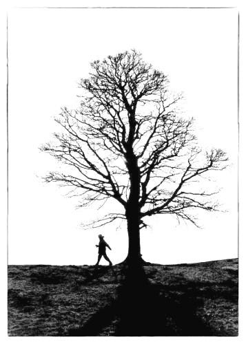 Winter Walker Silhouette tree