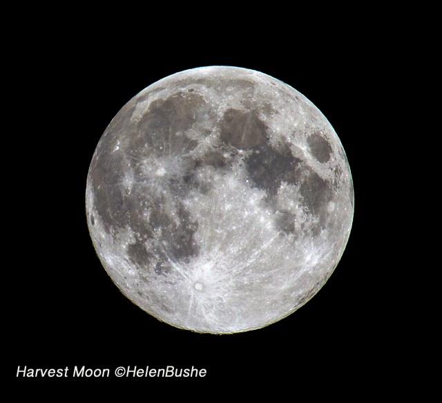 Harvest Moon © HelenBushe PHOTOPHILE
