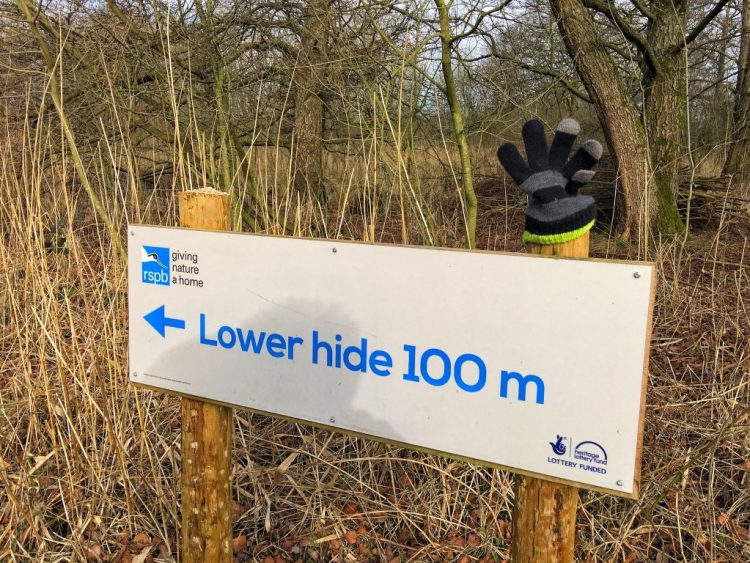 Lower Hide 100m RSPB Leighton Moss