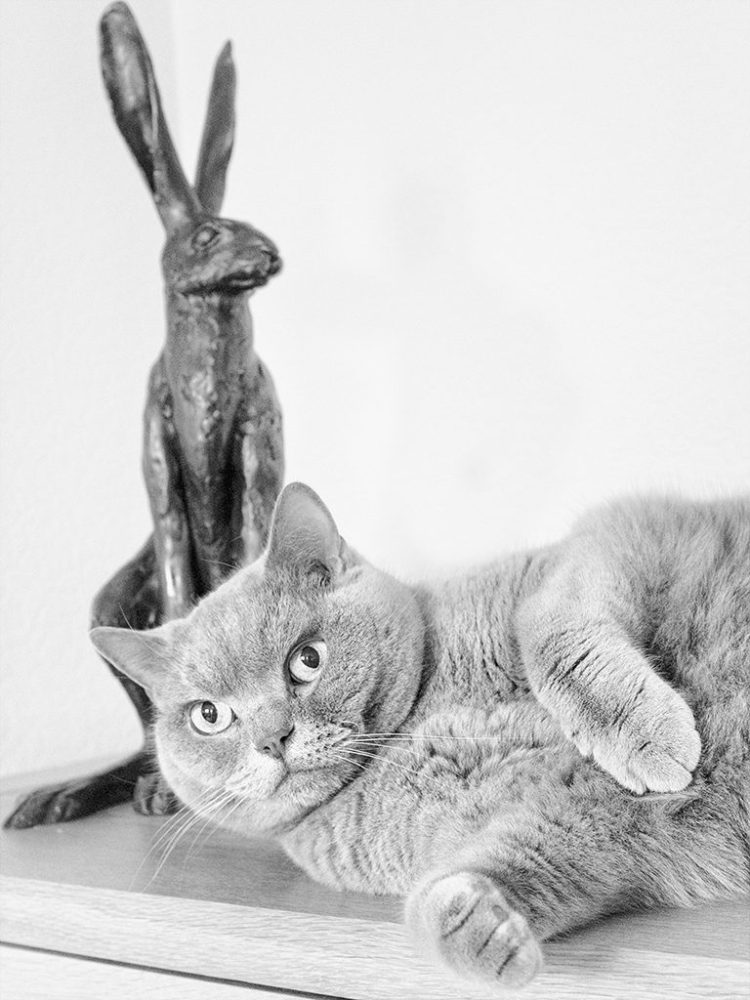 Misty & Hare monochrome cat pet
