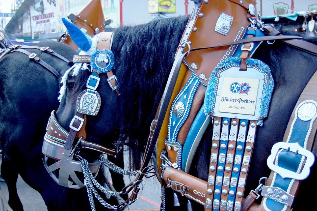 horses_oktoberfest