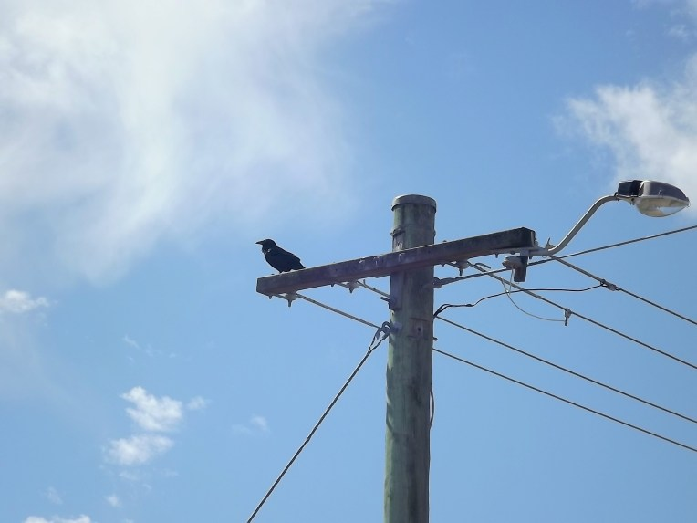 BIRDS ON A WIRE 5