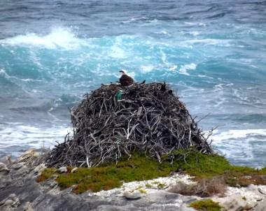 sea eagle 2