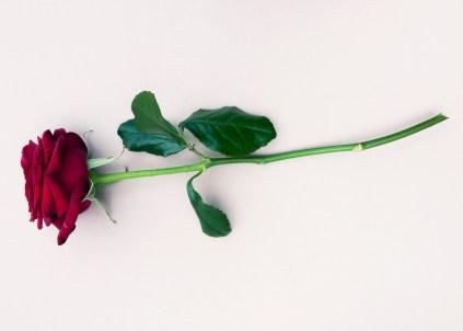 Rose - Beauty & The Beast