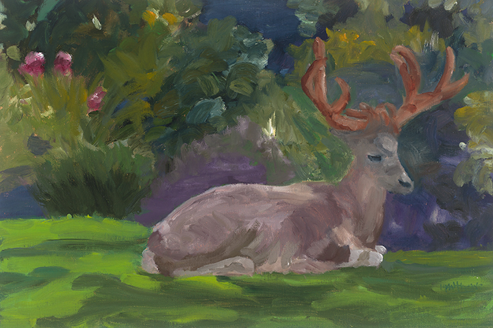 Backyard Buck, 18X24, oil on panel, Painter Helen Matthews