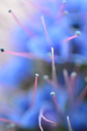 out of focus blue flowers