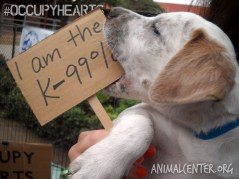 Occupy Protest - Adopt a pet | Helen Woodward Animal Center