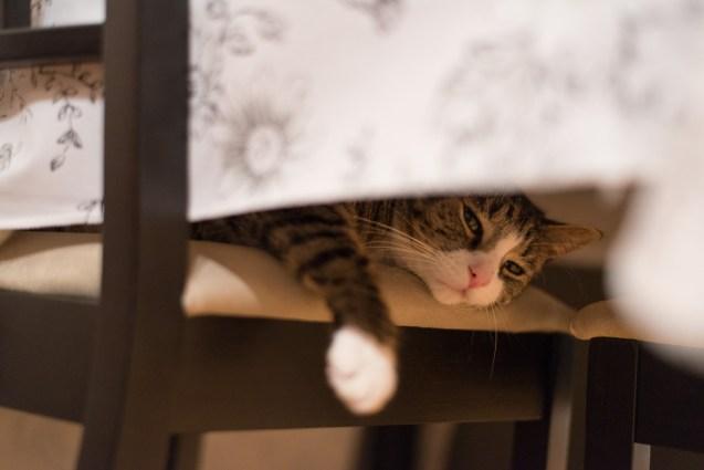 Hei. Jeg heter Pondus. Jeg er en katt. Jeg liker å være en katt.