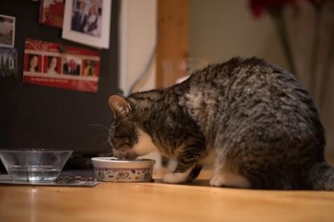 Det er nok nå, det er tid for en matbit. Jeg liker å være katt.
