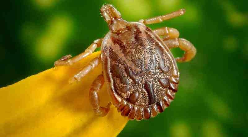 male bugs illness disease