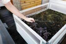 Kassene der de skal kunne dyrke det de trenger av grønnsaker.