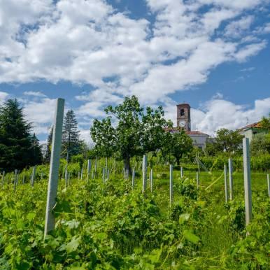 Piemonte_biella_lessona_helleskitchenL1460911