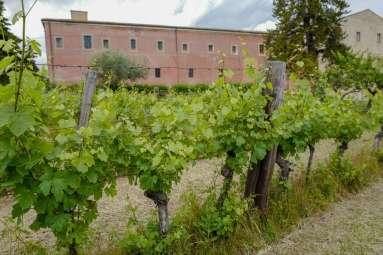 Abruzzo_wine_italianwine_helleskitchenL1680186