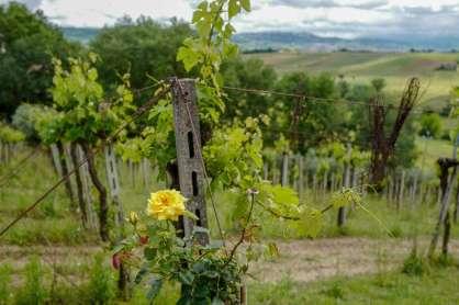Abruzzo_wine_italianwine_helleskitchenL1680379