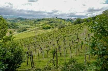 Abruzzo_wine_italianwine_helleskitchenL1680391