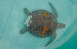 HelleValebrokk_Florida Keys_Florida_USA_Marathon_Key West_L1790518
