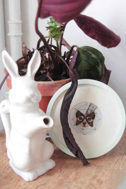 Carafe Lapin et Affiche Chat Papillon