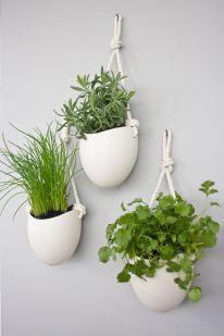 plante-suspendue