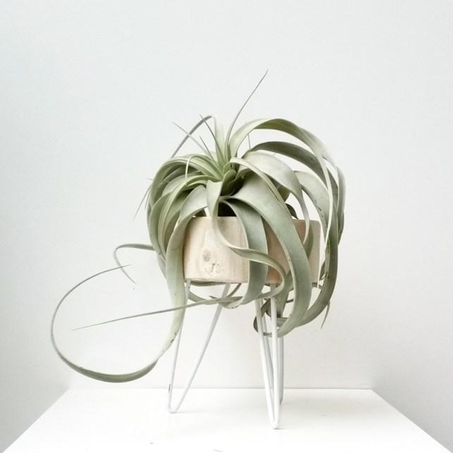 It-Plants Plantes Vertes OriginalesAirplant // Hëllø Blogzine blog deco & lifestyle www.hello-hello.fr #airplant #tillandsias