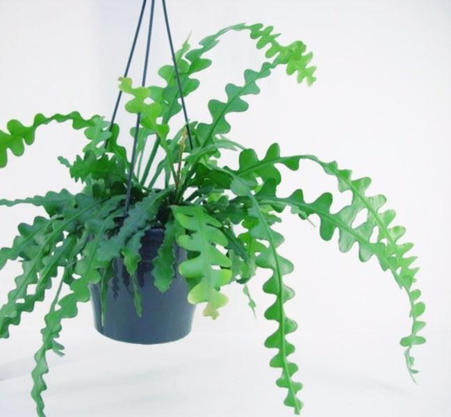 plante verte originale
