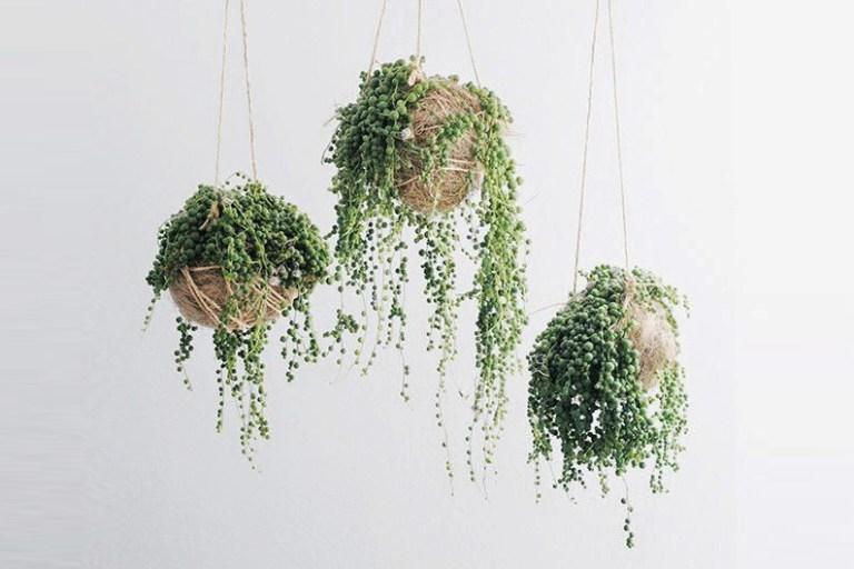 5 plantes vertes originales qui font le buzz sur les for Conseil sur les plantes