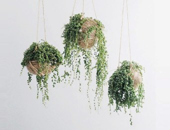 It-Plants String of Pearls // Hëllø Blogzine blog deco & lifestyle www.hello-hello.fr #stringofpearls #seneciorowleyanus