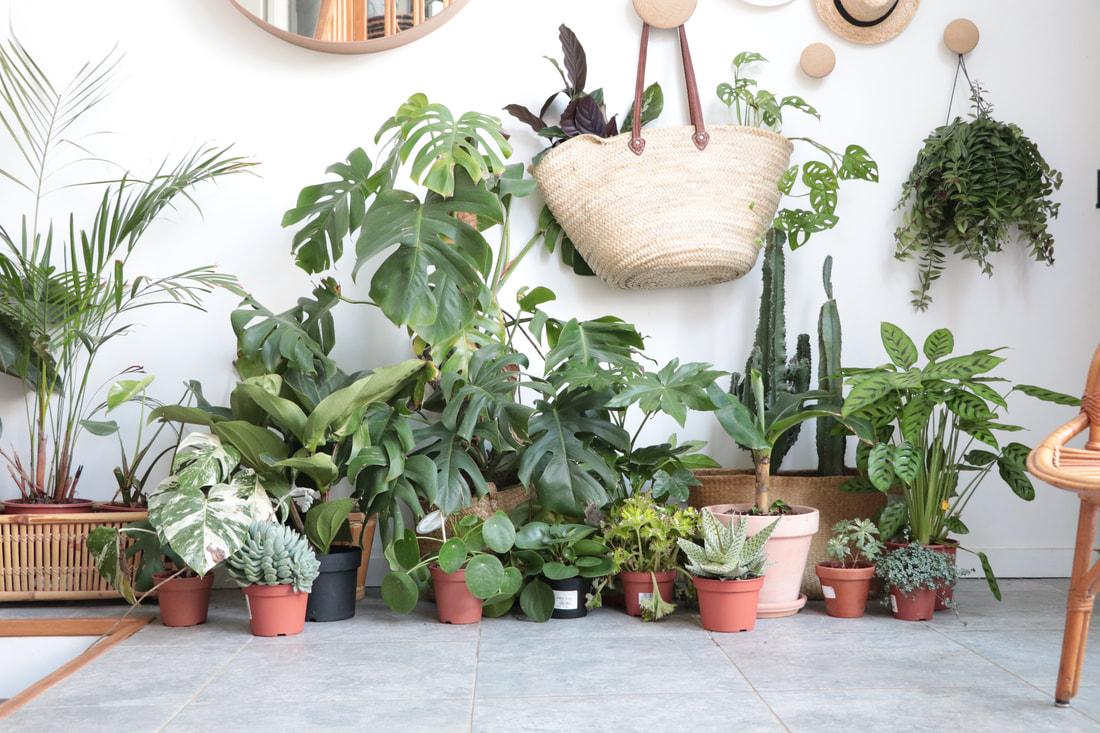 Plante Pour Cuisine Sombre 5 jolies plantes d'intérieur qui n'ont pas besoin de lumière