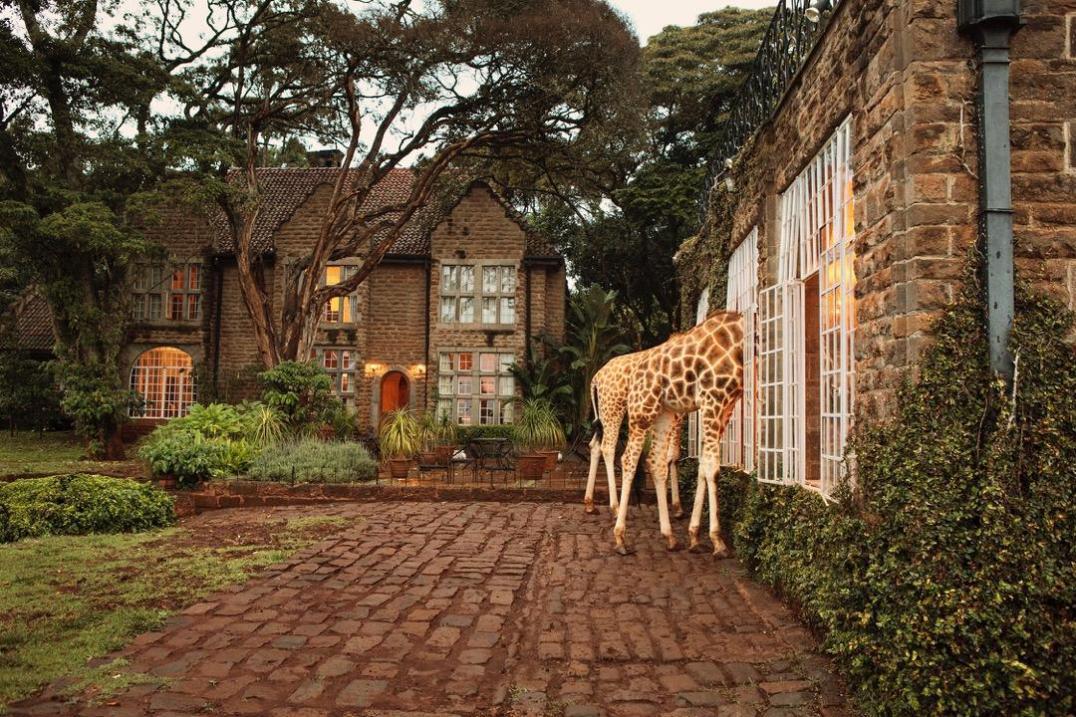 Ces hôtels ultra instragrammables qui nous font rêver Le Manoir des Girafes// Hëllø Blogzine blog deco & lifestyle www.hello-hello.fr