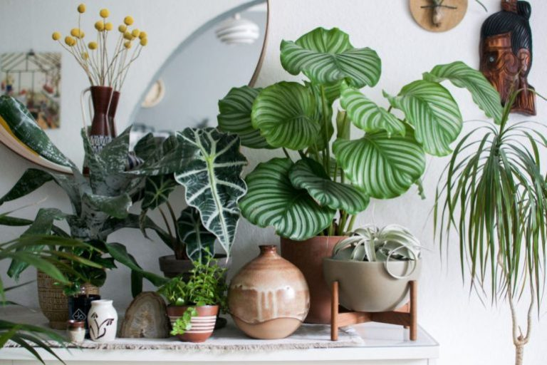 5 Plantes D Interieur Qui Poussent Vite Et Qui Sont Jolies